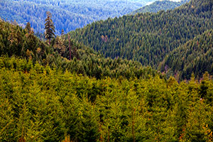 The Impact of Wood Use on North American Forests